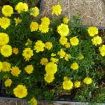 さごし花壇2